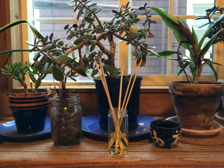 diffuser-plants