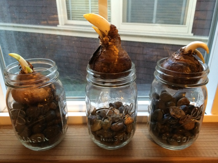 bulbs-in-mason-jars