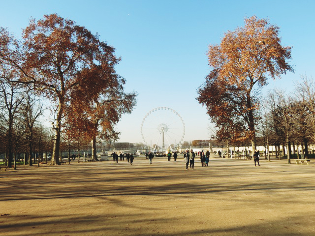 wild-cherry-tree-tuileries