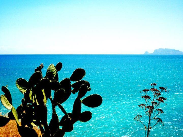 Cacti-Sea