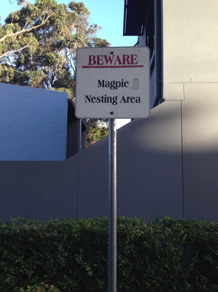 Magpie warning sign in Green Bans Park Erskineville