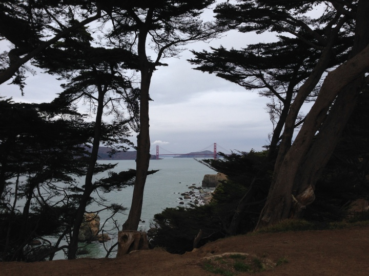 cypress-golden-gate-bridge