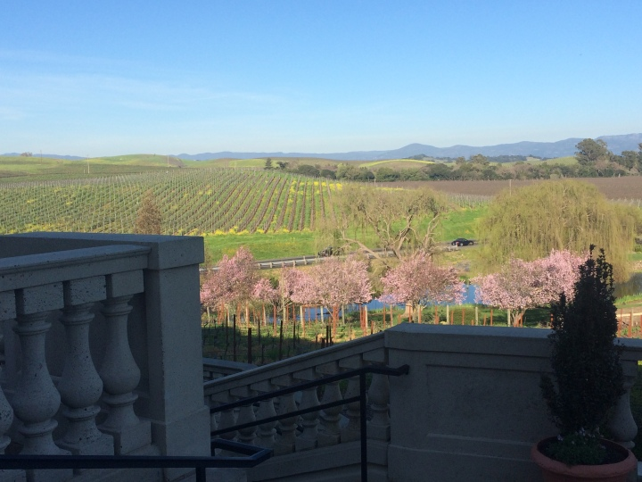 Domain-Carneros-in-bloom