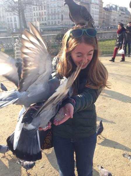 Shoshie-pigeons