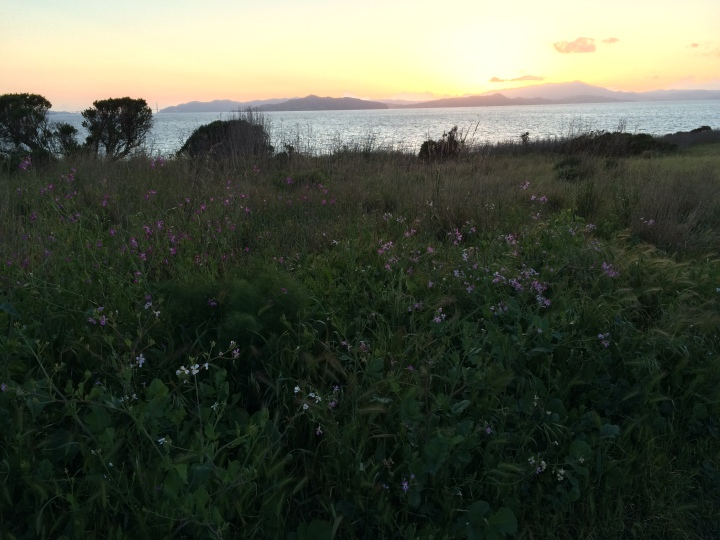 berkeley-marina-wildlowers