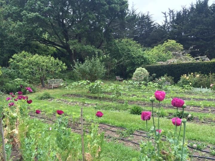 Green-Gulch-garden