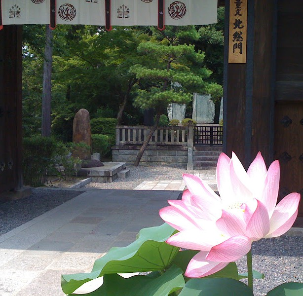Kiyomizu-dera-lotus