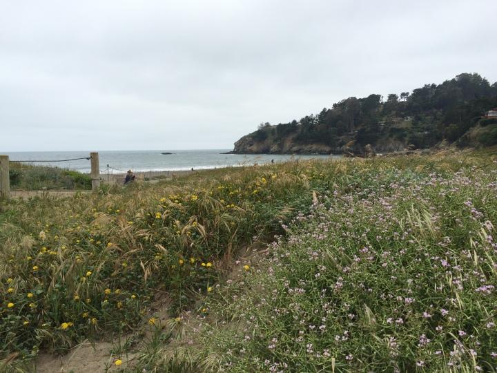 Pacific-ocean-glimpse